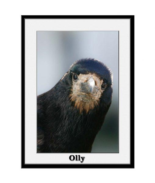 salty-old-sea-dog-rooks01