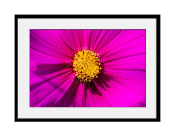 paul-mahoney-pink01