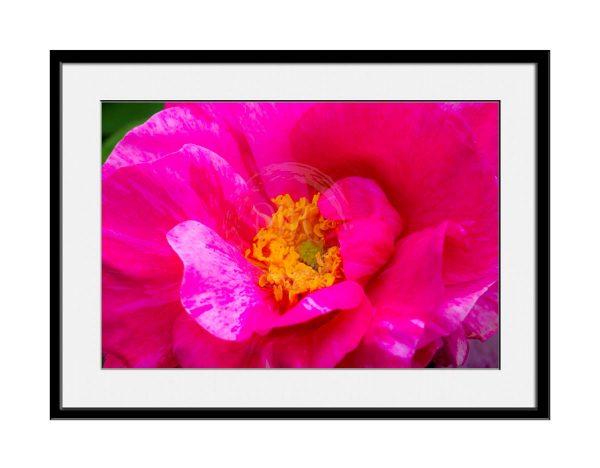 paul-mahoney-pink03