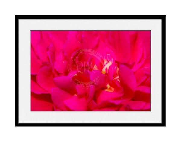 paul-mahoney-pink04