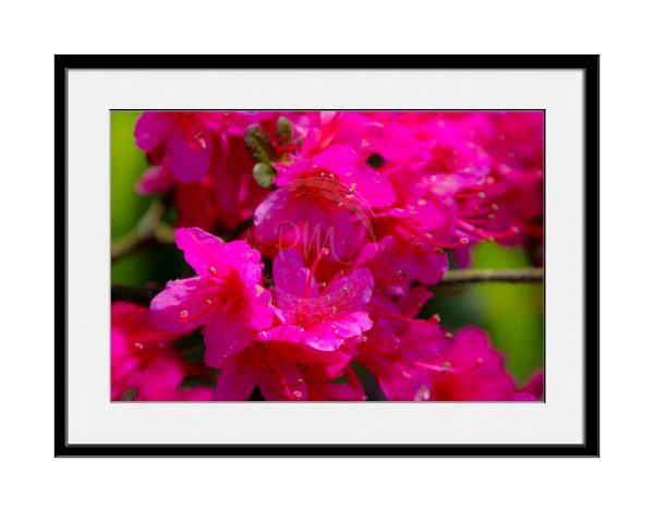 paul-mahoney-pink05
