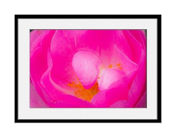 paul-mahoney-pink07