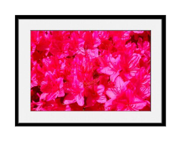 paul-mahoney-pink08