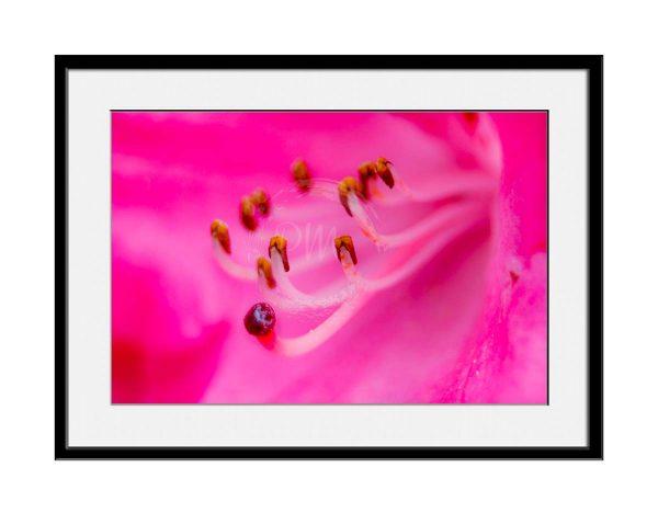 paul-mahoney-pink10