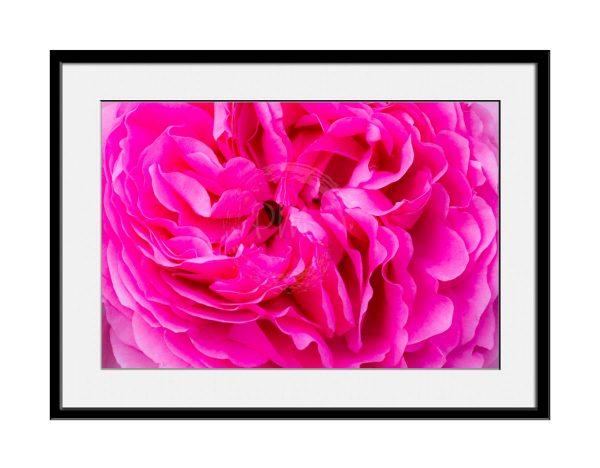 paul-mahoney-pink11