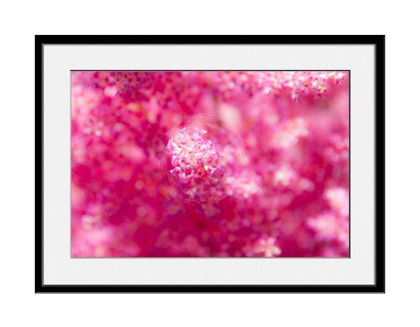 paul-mahoney-pink12